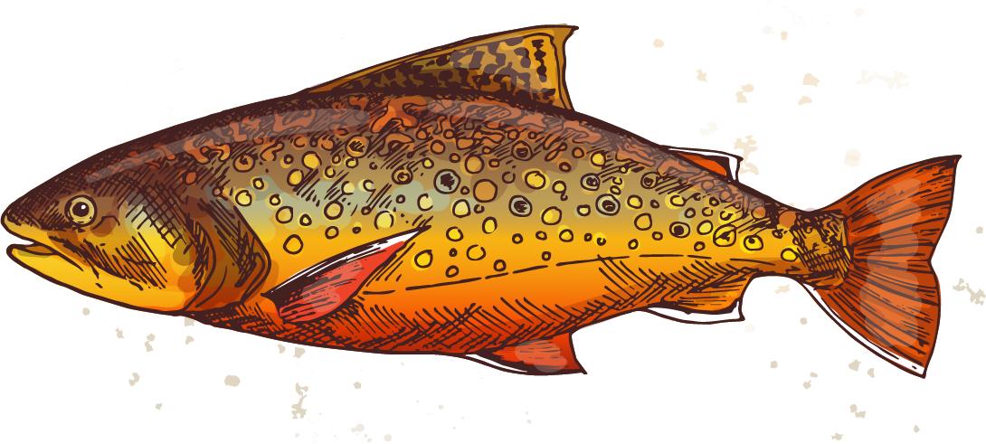 https://woodscabins.com/wp-content/uploads/2019/02/brook-trout-2.png