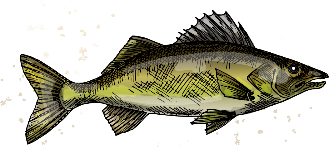 https://woodscabins.com/wp-content/uploads/2019/02/walleye.png